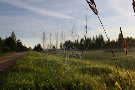 dewed: Dewed spider web in sunny morning