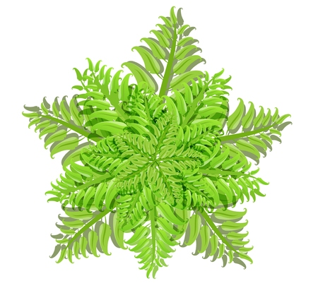 Plant of fern family Vector Isolated Illustration Illustration