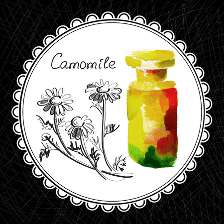 aromatic: Health and Nature Collection. Aromatic camomile oil (watercolor and graphic illustration)
