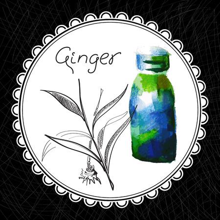 aromatique: Sant� et Nature Collection. Huile aromatique au gingembre (aquarelle et illustration graphique)