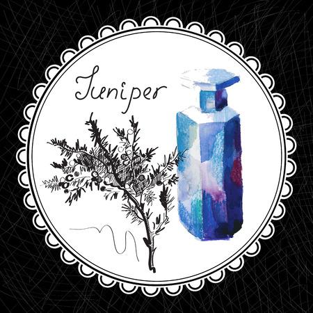 aromatique: Sant� et Nature Collection. Huile aromatique de gen�vrier (aquarelle et illustration graphique) Illustration