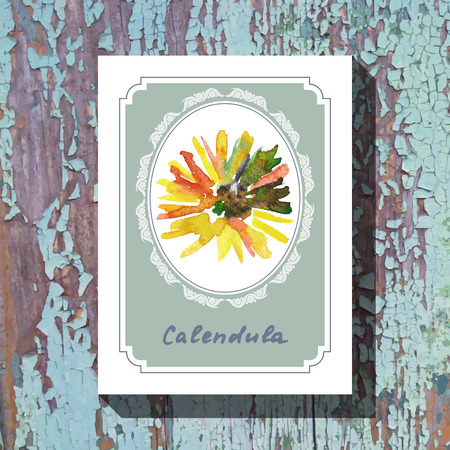 calendula: Card template with floral element with calendula on wooden background. For floral shop, wedding design, print and web