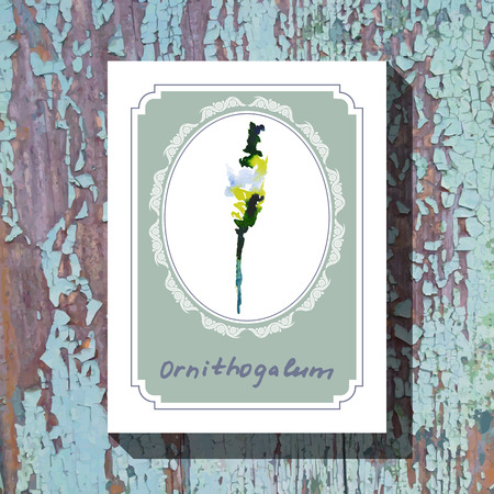 ornithogalum: Card template with floral element with ornithogalum on wooden background. For floral shop, wedding design, print and web