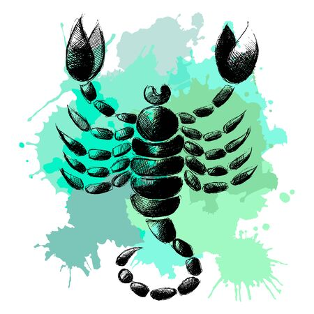 Decorative zodiac sign Scorpio. Horoscope and astrology (astronomy)-symbol. Vector illustration.