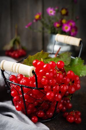fresh berries of viburnum. Selective focus. Rustic style.
