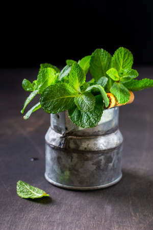 Mint leaves, fresh bouquet of mint in an old rustic bucket vase on an old dark background