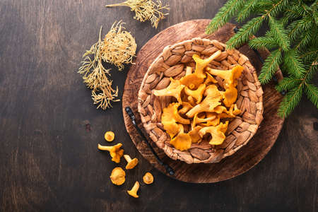 Forest Mushrooms chanterelles and forest moss on a wooden old background. Raw uncooked in rattan plate bowl over brown texture background. Mock up. Top view.