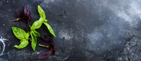 Branches of fresh green basil on a dark old table background. Flat lay.