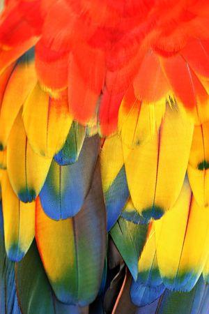 Feathers, parrots back