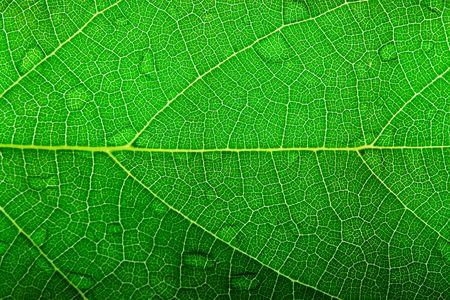 green leaf closeup Stock Photo - 461359