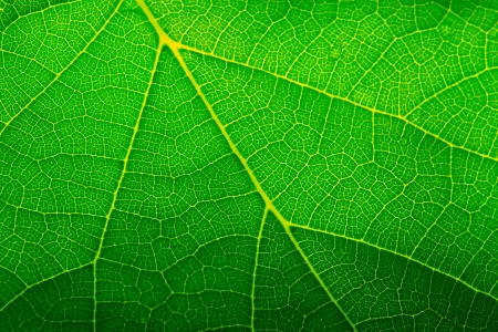 Green leaf closeup Stock Photo - 461163