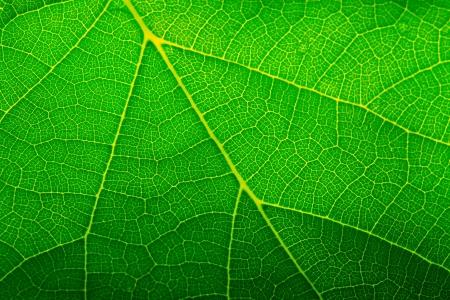 Green leaf closeup Zdjęcie Seryjne