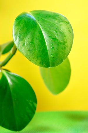 Green leaves with water drops Stock Photo