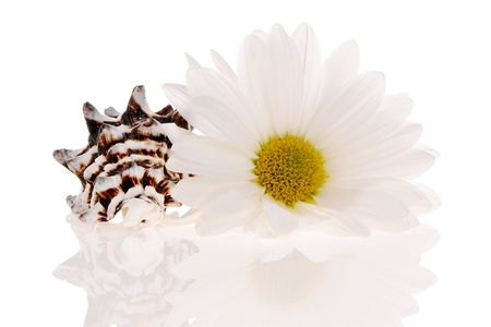 revitalize: Seashell and flower isolated on white