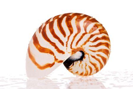 Nautilus seashell isolated on white background photo