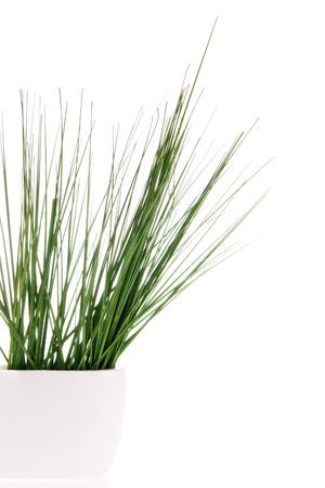 Grass in vase isolated on white