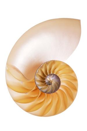 Nautilus Split Half shell isolated on white background Stock Photo