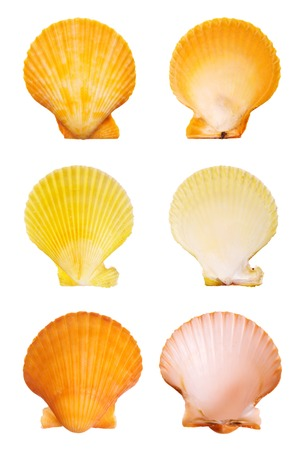 Scallop shells isolated on white background Imagens - 1565409