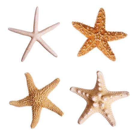 Starfish isolated on white background Imagens - 1614113