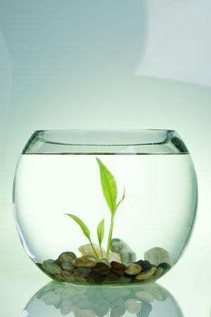 fish tank: Water plant in a fish tank