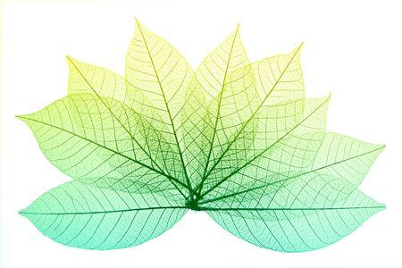 Skeleton Leaves Composition on white background Imagens - 2051278