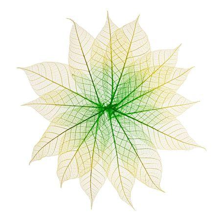 Skeleton Leaves Flower Composition on white background