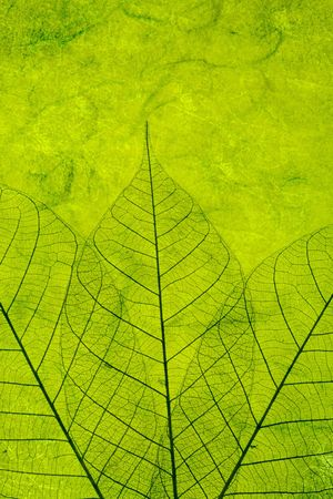 Green paper Texture background abstract
