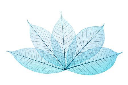 Skeleton Leaves Composition on white background Imagens - 2071899