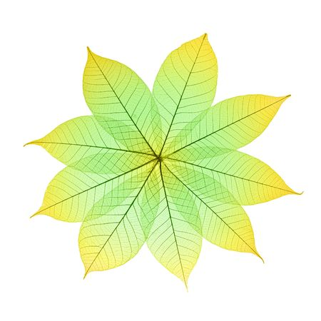 Skeleton Leaves Flower Composition on white background Stock Photo - 2071892
