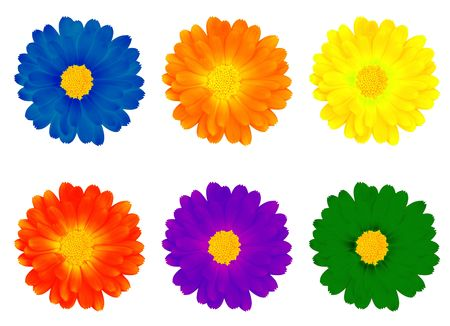 Six colourful flowers on the white background Stock Photo - 1352498