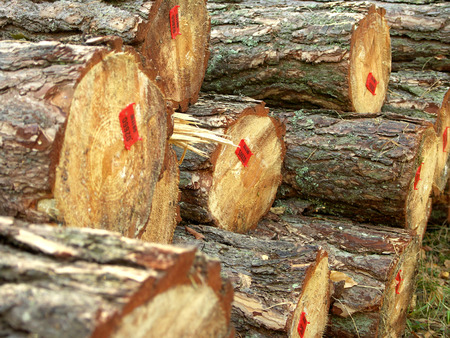 A stack of timber ready for sawmill  Stock Photo