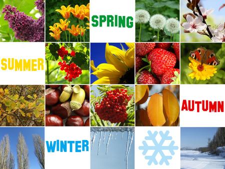 dandelion snow: Composition of the four seasons