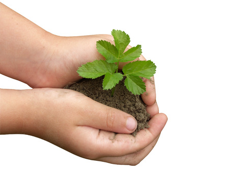 Childrens hands holding small plant growing from soil  Stock Photo