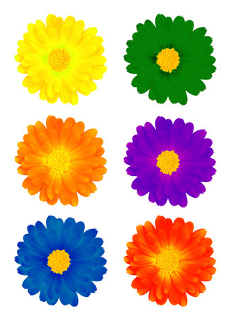 Six colourful flowers on the white background