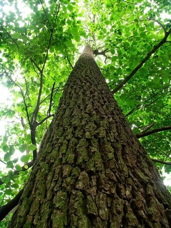 going out: albero di essere uscire con il cielo