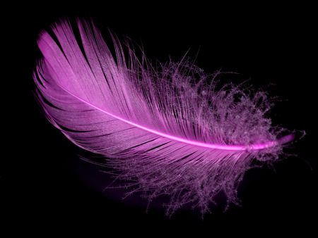 Single pink feather over black background Stock Photo