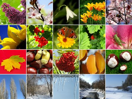 Composition of the four seasons Stock Photo - 1907859