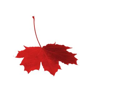 Colourful maple leaf on the white background.  Stock Photo - 2105373