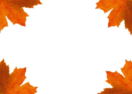 Colour frame from maple leaves on the white background. Stock Photo - 2105378