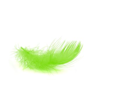 Single pink feather over white background
