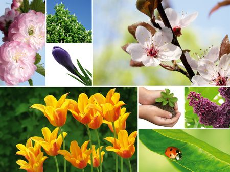 Composition of different spring photographs. It is possible to use the background. photo