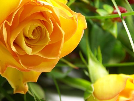 Bunch of beautiful yellow roses. Stock Photo