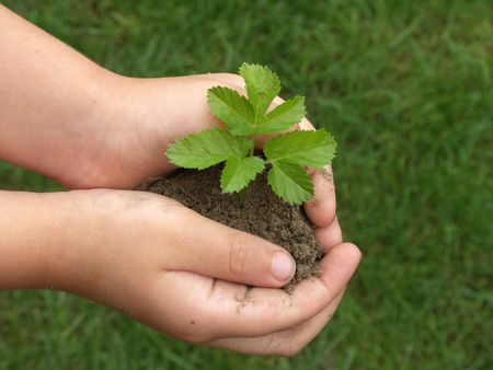 Childrens hands holding small plant growing from soil  photo