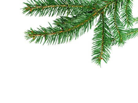 Christmas tree isolated on the white background. Stock Photo - 6088165