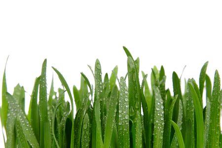 Grüne Gras auf dem weißen Hintergrund isoliert.