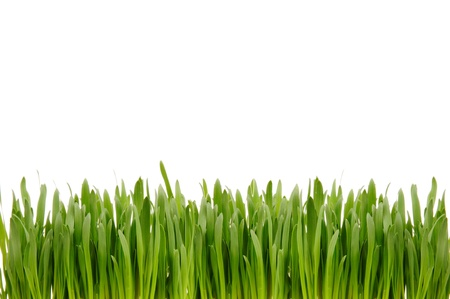 Green grass on the white background.