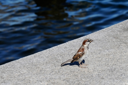 Sparrow perched over the water. Banco de Imagens