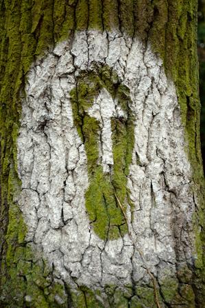 indication: Indication arrow on a tree