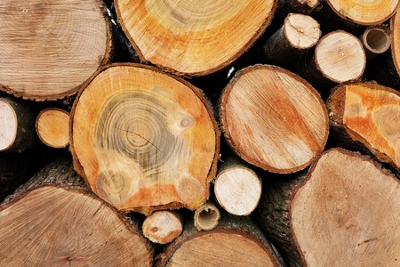 Logs of wood, cross cut of different kinds of trees. photo