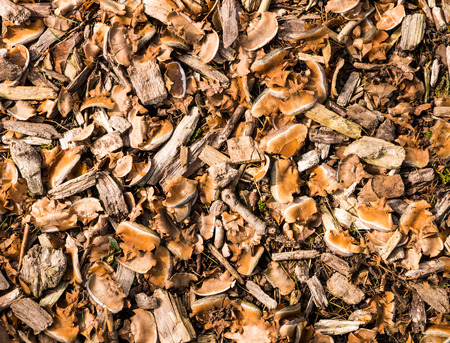 mulch: Natural mulch below a conifer tree, consisting of pieces of wood and fragments of cones Stock Photo